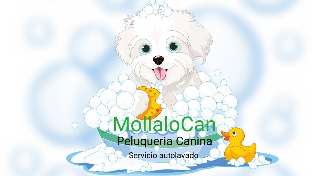 Mollalo can